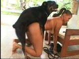 Filha cavala flagrada fazendo zoofilia com cachorro