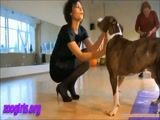 Coroa gostosa zoofilia amadora com cachorro sortudo