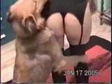Gostosa mulher linda dando a bucetinha para o cão em zoofilia com cachorro no porno