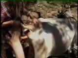 Zoofilia Porno homem comendo buceta e fazendo sexo anal com uma vaca
