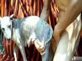 Zoofilia com tarado arregaçando a buceta amadora da cadela