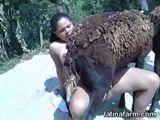 Video Zoofilia fodendo cabrito em sexo com animais com morena Gostosa dando pra cabrito