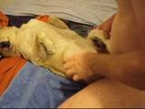 Zoofilia Homem socando a piroca na buceta da cadela neste video de zoofilia