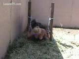 Video Zoofilia filmou a esposa fodendo com cachorro no quintal da casa em sexo zoofilia com cachorro