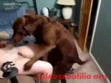 linda Ruivinha fodendo com cachorro neste video de zoofilia caseiro