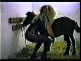 Zoofilia de Gostosa fodendo com ponei neste video de zoofilia amador