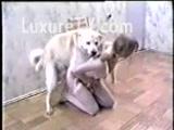 Zoofilia Novinha safada fodendo muito com seu cachorro penetrando fundo na buceta da novinha