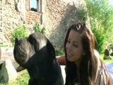 Zoofilia Novinha Brasileira caiu na net transando com cachorro na Zoofilia Nacional