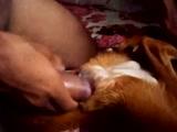Zoophilia videos de homem socando na buceta da cadela no video de sexo zoofilia