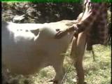 Zoofilia Videos Homem transando com vaca no Video zoofilia brasileiro