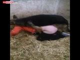 Videos Zoofilia Mulher Mexicana fazendo zoofilia com seu cachorro caiu na net no video amador