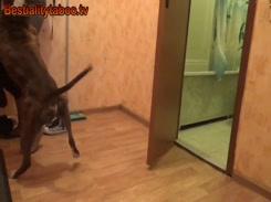 Videos de zoofilia ninfeta gostosa faz sexo com cachorro do pau duro