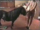 Mulher fodendo com poney na fazenda