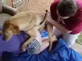 Fazendo o cachorro comer o cu da esposa puta