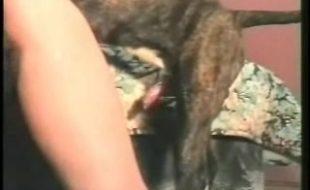Cachorro de raça arromba buceta cabeluda da loira madura