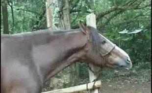 Carioca gostosona chupa vara comprida e grossa do cavalo ao ar livre