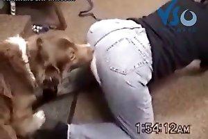 Zoofilia online safada com calça rasgada goza na língua do dog