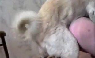 Corno filma esposa putona fodendo com seus cachorros