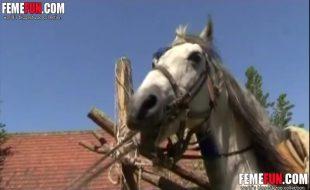 Coroa de cabelos curtos chupa e engole a vara do cavalo no bucetão