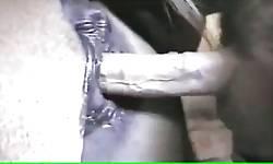 Dotado na zoofilia comendo a buceta da égua e gozando gostoso