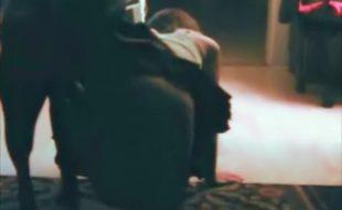Garoto filma escondido prima de quatro fodendo com cachorro