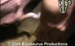 Gay safado soca pau do porco enorme no cu e goza na zoofilia xxx