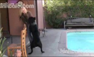 Loira linda se esfrega e fode com cachorro preto no quintal na beira da piscina