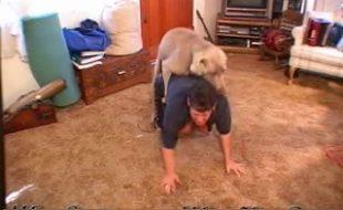 Marido filma esposa chupando e dando o cu de quatro para cão dotado