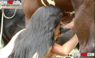 Namoradas lésbicas chupam vara enorme de um cavalo de raça
