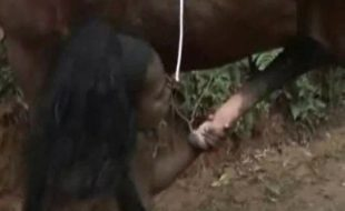 Negra tetuda nua masturba buceta chupando vara gigante do cavalo