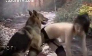 Ninfeta de cinta liga dando gritinho no pau grosso do cachorro