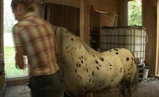 Novinha se masturba fica nua e faz chupeta para cavalo dotado