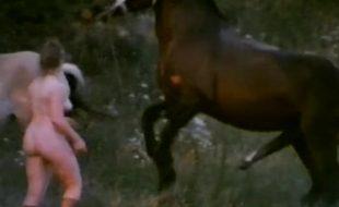 Puta na fazenda enrabada por cavalo que rasga sua buceta