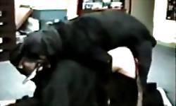 Rottweiler preto fode o puto de quatro até o orgasmo