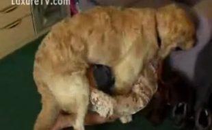 Safada da a buceta para seu cão peludo e seu noivo tarado