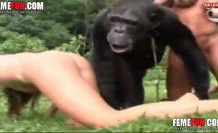 Safadas deixam macaco enorme enfiar dedinho e foder suas bucetas