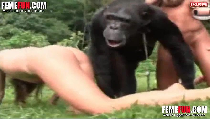 Human and chimp ancestors might have interbred