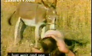 Vadias fodendo no meio do campo com cão e burro dotado