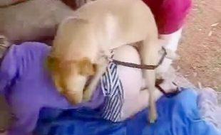 Zoofilia Caseira com casal fodendo com cachorro em Cachoeira Brasil