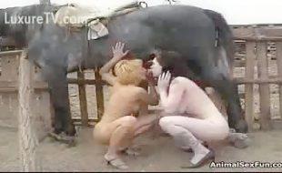 Zoofilia mãe e filha chupam e tomam porra do rola do cavalo dotado