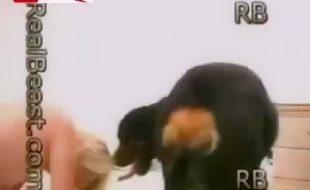 Zoofilia Videos com loira Brasileira gostosa fazendo sexo com cachorro grande rasgando sua buceta